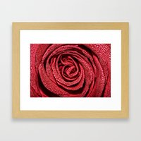 Raindrop Rose Framed Art Print