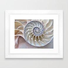 Nautilus Shell Framed Art Print