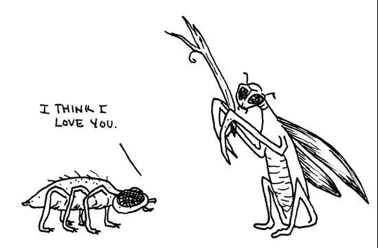 Love Bugs. Art Print