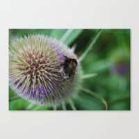 Bee in the summer Canvas Print