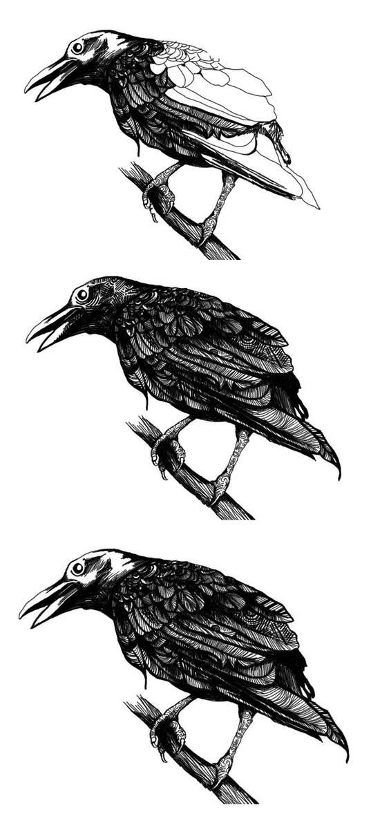 Raven Study Art Print