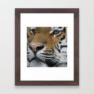 Tigerface Closeup Framed Art Print