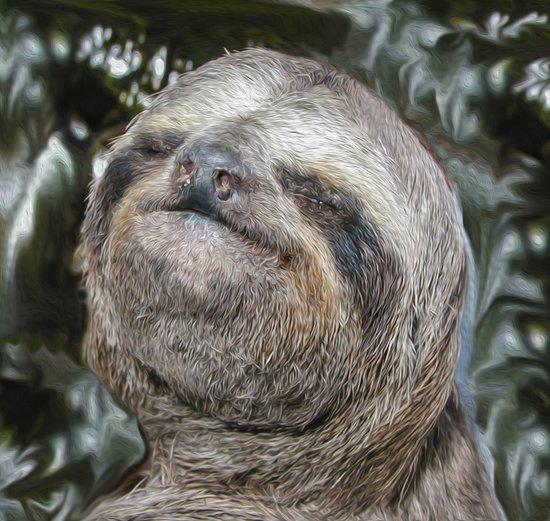 Sloth Art Print