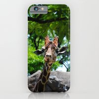 iPhone & iPod Case featuring At the Zoo by Stuart Charl