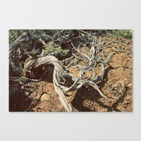 Desert spirit Canvas Print