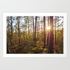 Evening in the forest Art Print