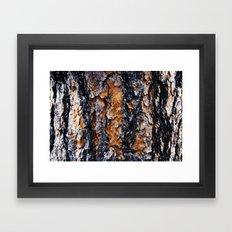 Beautiful Bark Closeup Framed Art Print