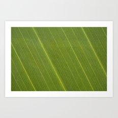 Palm Tree Leaf Art Print