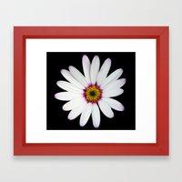 Colour Osteospermum Framed Art Print