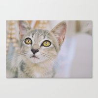 Cat of the floating village Canvas Print