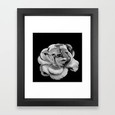 Rose in black and white  Framed Art Print