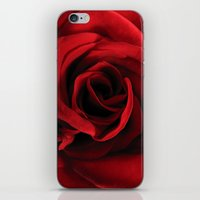 Rose #2 iPhone & iPod Skin