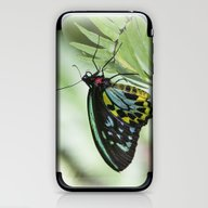 Birdwing Butterfly iPhone & iPod Skin