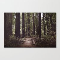 Redwood Forest Canvas Print