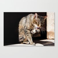 Cleaning Up Canvas Print