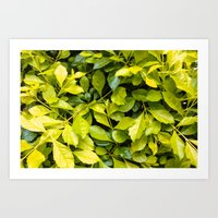 Too much green leaves Art Print