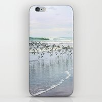 seabirds iPhone & iPod Skin