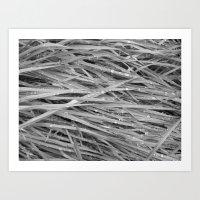 Grass 1 Art Print