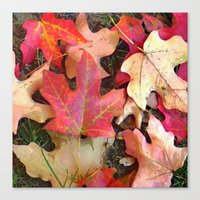 Maple Leaves In Fall Canvas Print