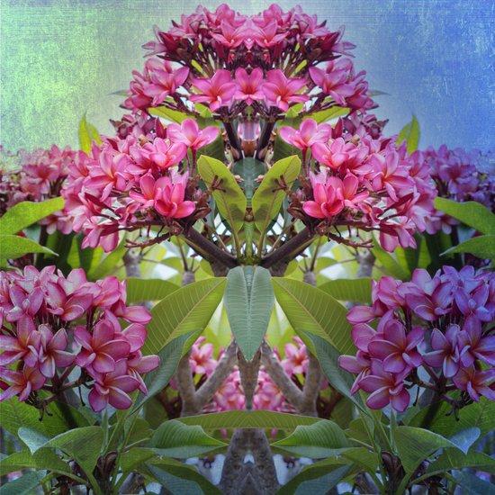 Pink Frangipani Mirrored Art Print