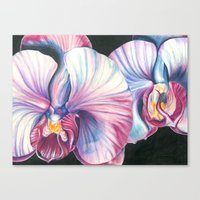 Pink Orchid Study Canvas Print
