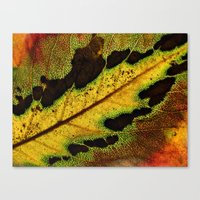 Leaf Veins III Canvas Print
