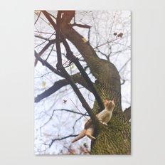 Little orange cat on a big tree Canvas Print