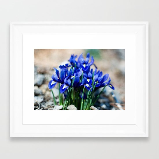 Iris Watercolor Framed Art Print
