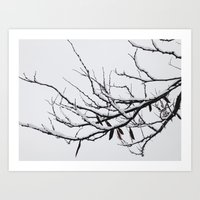 Winter's Reach Art Print