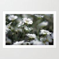 Snow In Summer Art Print