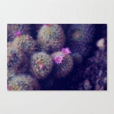 Little Cactus Flowers Canvas Print