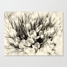 Once upon a summertime Canvas Print