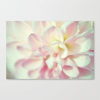Petals of Cream and Pink Canvas Print