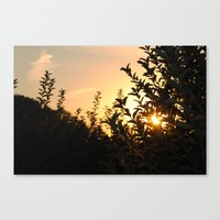 Apple Orchard at Sunset Canvas Print