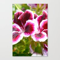 Hibiscus in Maui Canvas Print