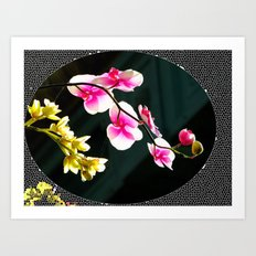 Morning Orchid Art Print