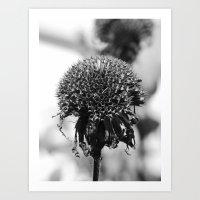 Dead Cone Flower VI Art Print