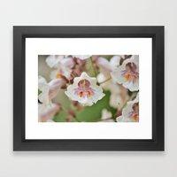 Blooming Chestnut Framed Art Print
