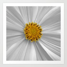 cosmos bloom I Art Print
