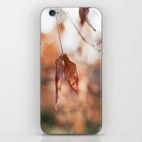 Late Autumn Light II iPhone & iPod Skin