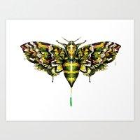 Exhotic Moth Art Print