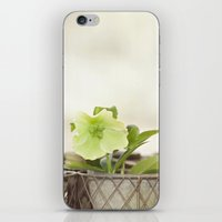 Heavenly Hellebore iPhone & iPod Skin