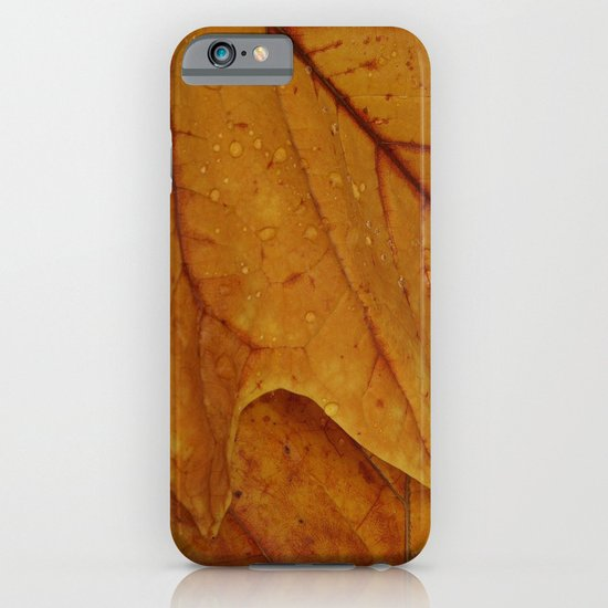 American Tulip Poplar Leaves iPhone & iPod Case