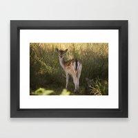 Devonshire Bambi  Framed Art Print