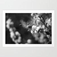 Flowering Almond In Blac… Art Print