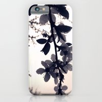 after spring morning rain iPhone 6 Slim Case