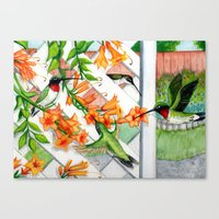 Hummingbirds and Trumpet Vines Canvas Print
