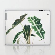 Elephant Ear Laptop & iPad Skin