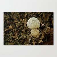 Fall Blooms Canvas Print