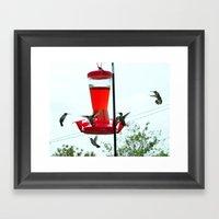 Humming Birds Migrating Framed Art Print